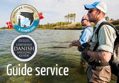 fishing guide service for sea trout at denmark fishing lodge fyn