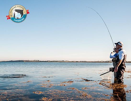 Fishing guides denmark fishing fyn guiding sea trout